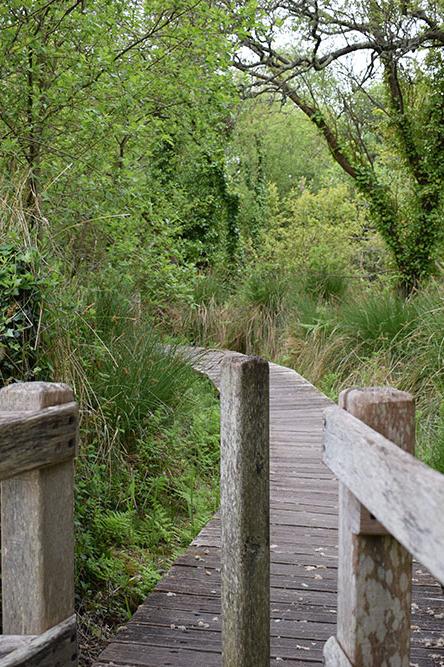 Marais du Quellen - Trébeurden - Pont Ar Prelleg